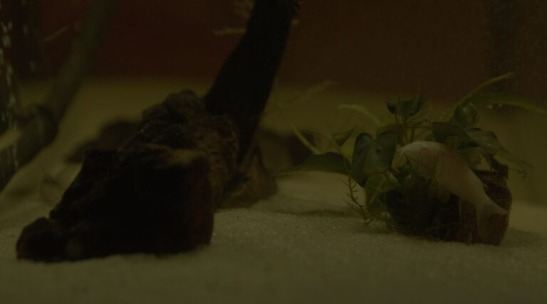 Fish in the aquarium 4K